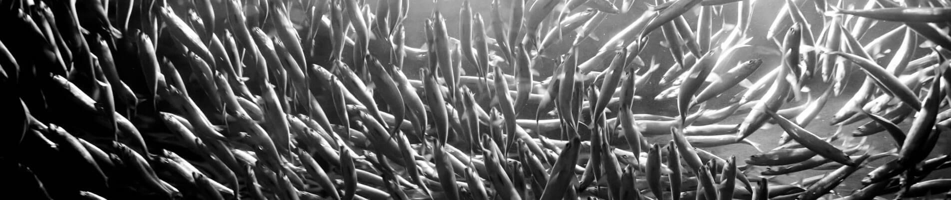 Ζωονομή ΑΒΕΕ - Ψάρια